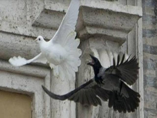 Crow.Dove